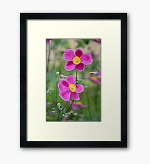 Pink anemone flowers Framed Print