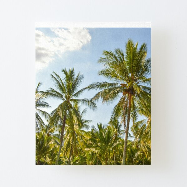 Palm Trees, Port Douglas - Tropical Paradise by drone Canvas Mounted Print