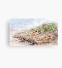 Dune Grass Canvas Print