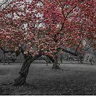 Best Blossom by Adam Northam