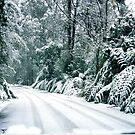 Snowy road, Marysville, Victoria, Australia by Margaret  Hyde