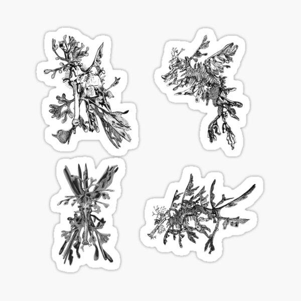 Sea 3 -Leafy Sea Dragons x 4  Sticker
