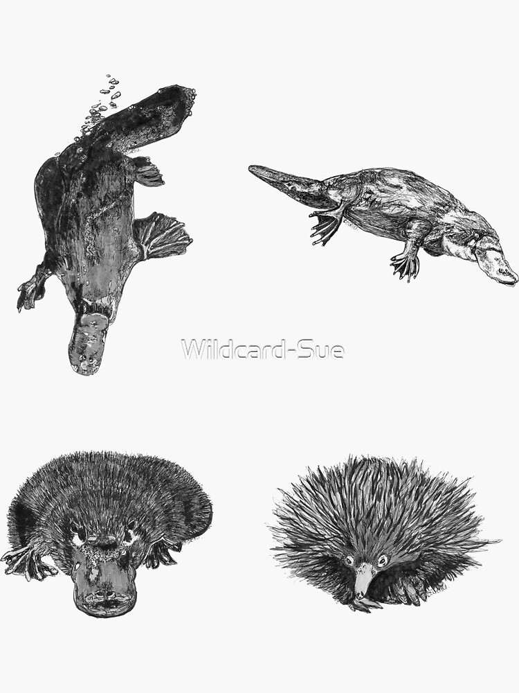 Land 6 - Platypus and Echidna x 4  by Wildcard-Sue