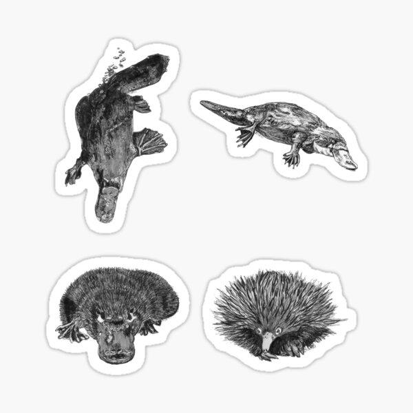 Land 6 - Platypus and Echidna x 4  Sticker