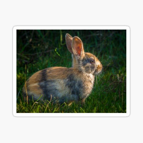 Cute wild rabbit Sticker