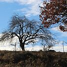 A Silhouette of Winter Trees by Dennis Melling