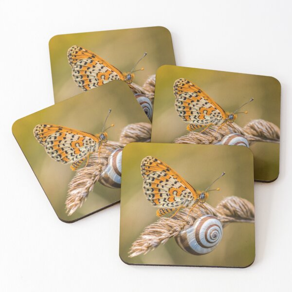 Butterfly (spotted fritillary) hanging out with a snail Coasters (Set of 4)