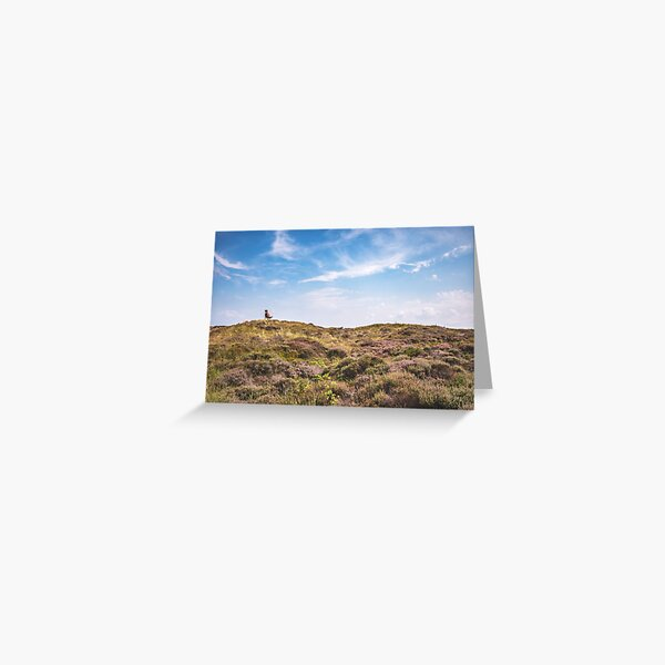 Wild horse on a hill Greeting Card