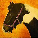 sisco horse by lucy beckett
