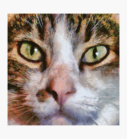 Long Haired Tabby Cat Close Up Portrait Photographic Print