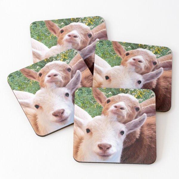 Goats! Coasters (Set of 4)