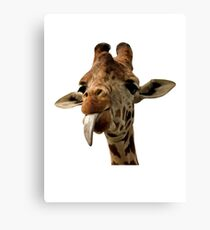Giraffe with Cute Tongue! Canvas Print