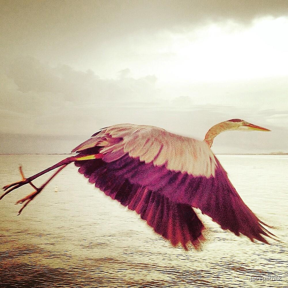 Let's Fly Away by jaeepathak