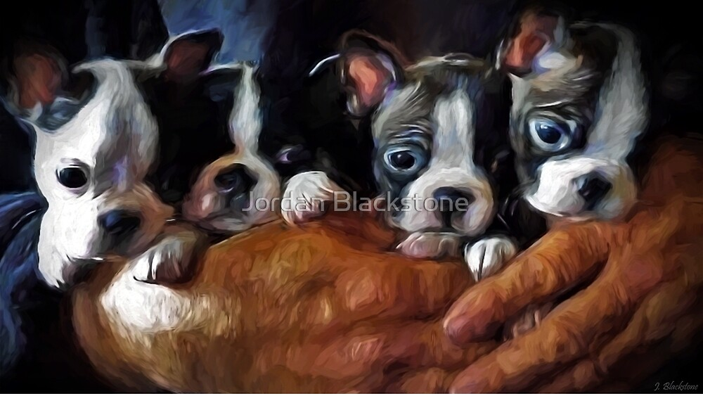 Safe In The Arms Of Love - Puppy Art by Jordan Blackstone