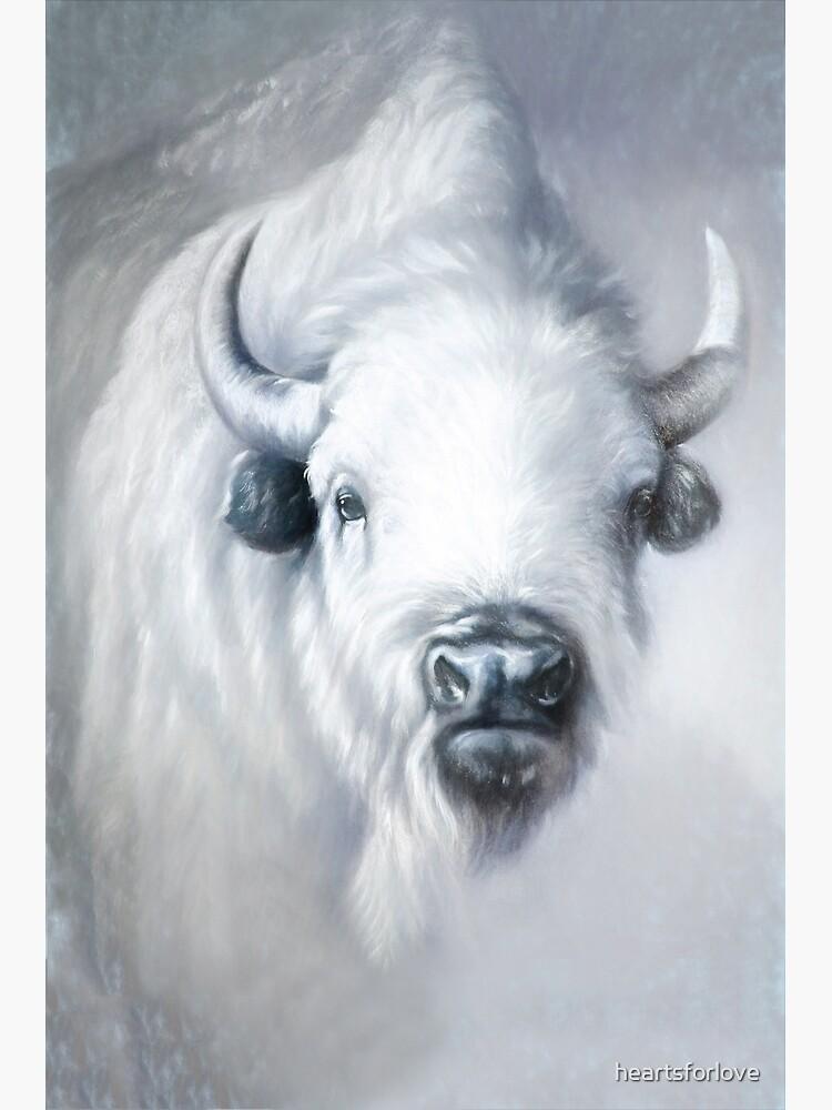 White Buffalo, White Bison: sanctity by heartsforlove