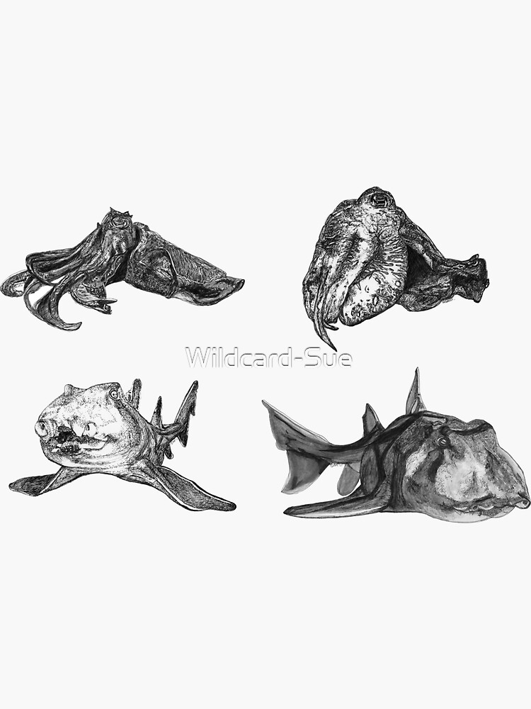 Sea 2 - Cuttlefish and Port Jackson Sharks x 4  by Wildcard-Sue
