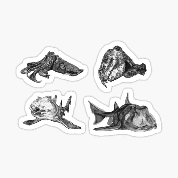 Sea 2 - Cuttlefish and Port Jackson Sharks x 4  Sticker