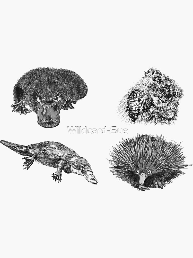 Land 2- 2x Platypus, Echidna and Wombat x 4  by Wildcard-Sue