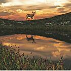 Sunset Deer Pond by Walter Colvin