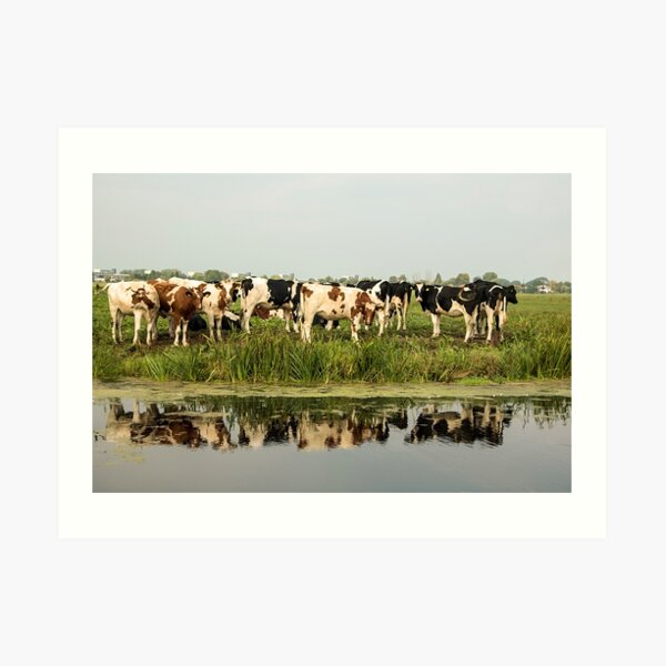 Cows and their reflective image Art Print