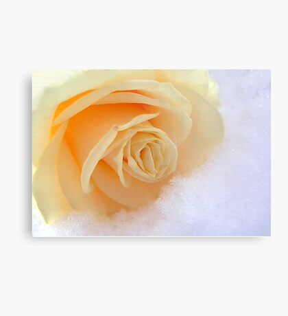 A rose on my heart has melted the snow Metal Print
