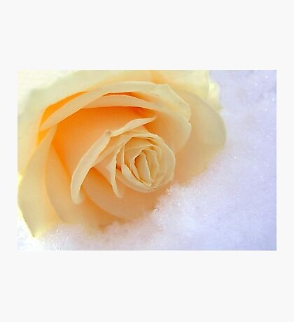 A rose on my heart has melted the snow Photographic Print