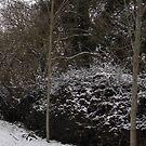 Snowy Hedge by lezvee
