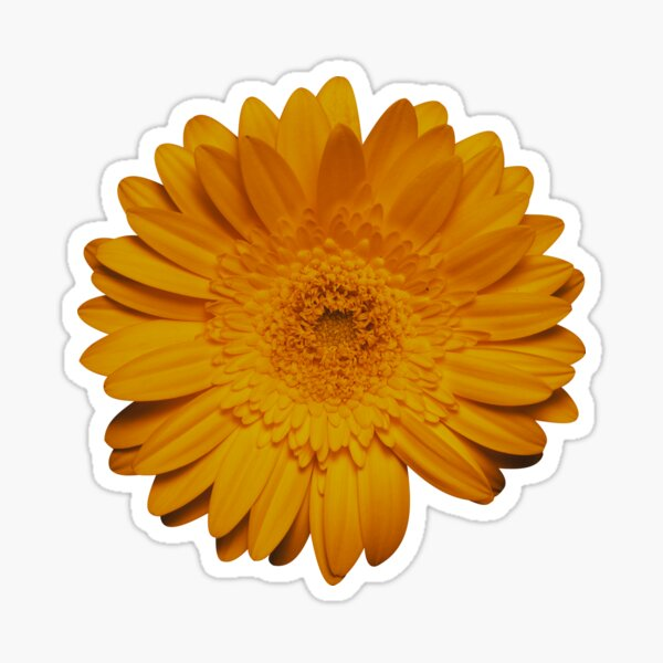 Wild yellow daisy flower photo Sticker