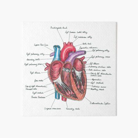 Healthy Heart Art Board Print