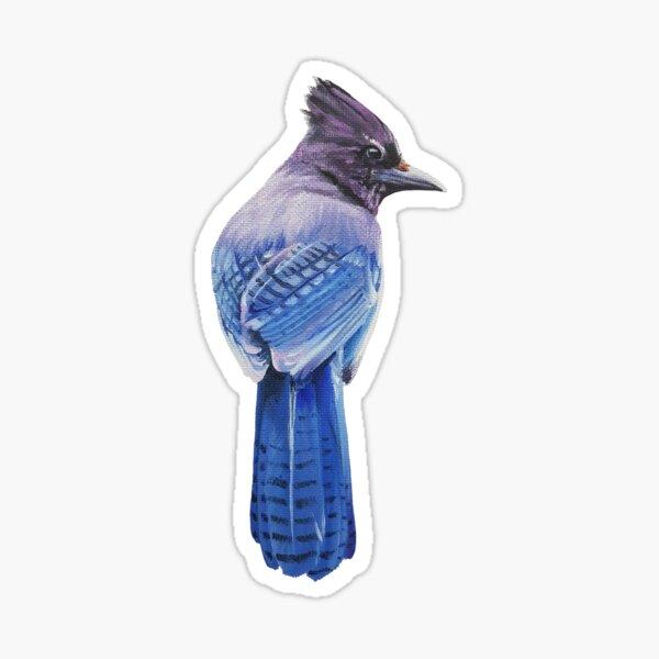 Steller's Jay - bird painting (no background) Sticker
