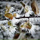 Winter Dressing by naturelover