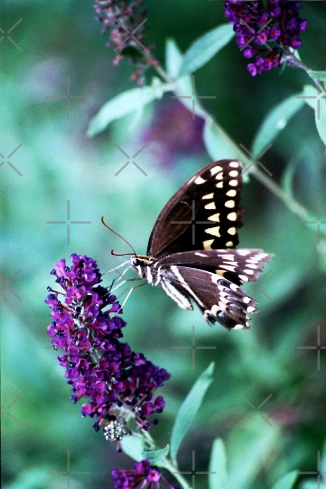 Nectar Connoissuer  by Julie's Camera Creations <><