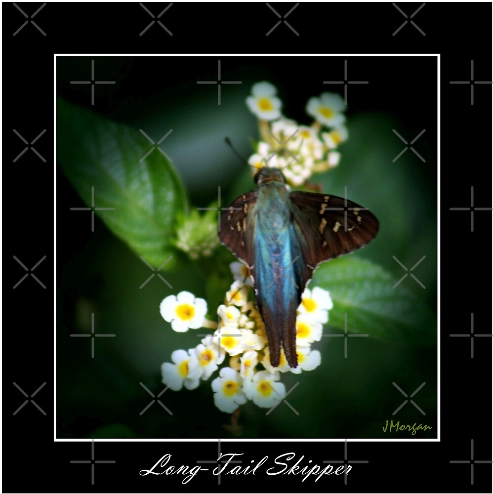 Long Tail Skipper by Julie's Camera Creations <><