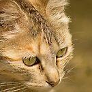 122515 intense cat by pcfyi