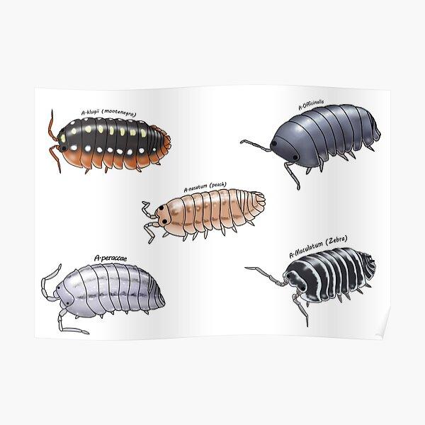 Isopod sticker pack 1 Poster
