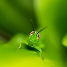 Smiling Grasshopper by Keith G. Hawley
