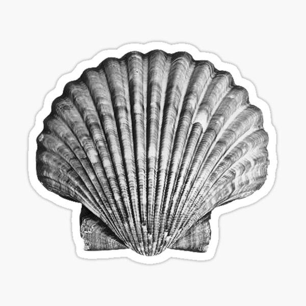 Black and White Seashell Sticker