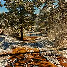 Snowy Country Road by Adam Northam