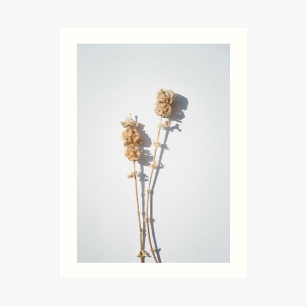 Dry flower and shadow Art Print