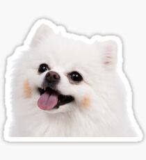 White Pomeranian Sticker