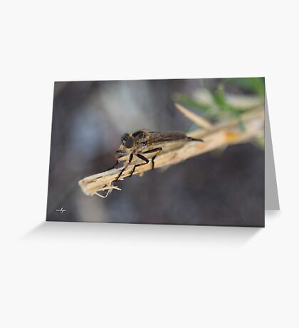 untitled fly Greeting Card