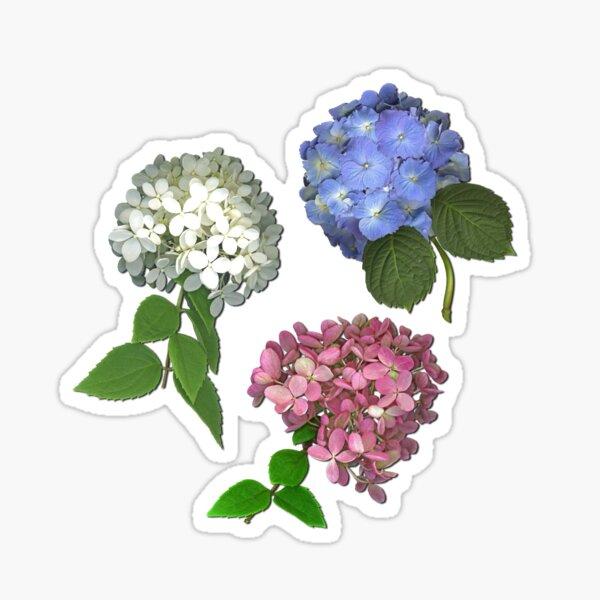 Hydrangea Trio Sticker