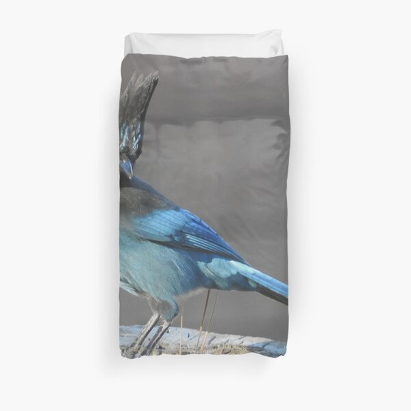 Wild birds, Stellar's Jay, wildlife, blue jay Duvet Cover