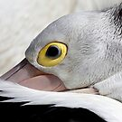 Pelican I by Kathie Nichols