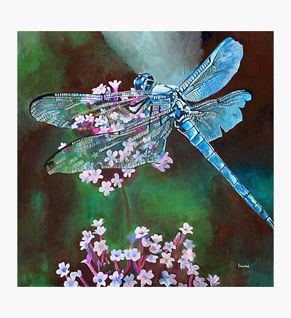 Blue Dragonfly Resting On Wild Garlic Photographic Print