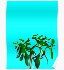Good Luck Succulent Tree on Sky Blue Poster