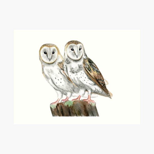 Watercolor Barn Owls Art Print