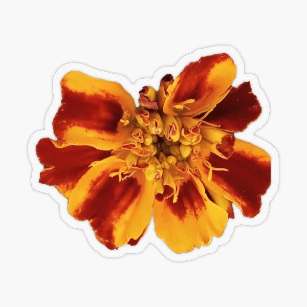 Marigold Flower Transparent Sticker