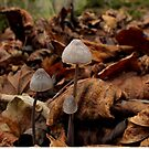 Mini mushrooms. by Livvy Young