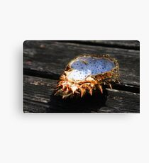 Spider from The Worm's Head Canvas Print